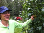 Alberta Pear tree