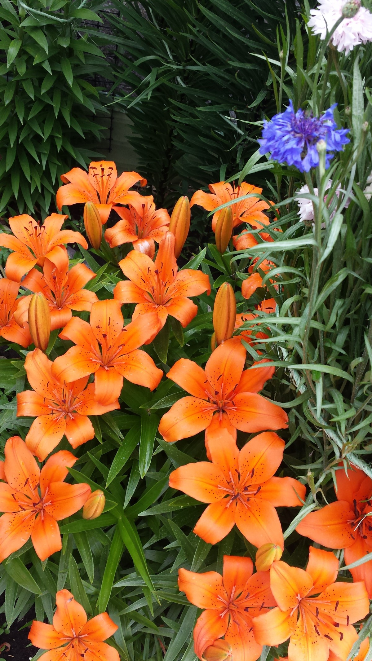 Annual and PerennialFlowers